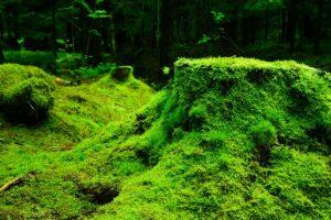 Foto de Musgo en el Bosque
