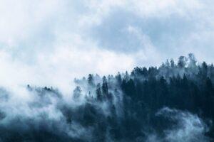 Bosque con Mucha Neblina