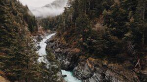 Foto de un rio a Través de un Bosque