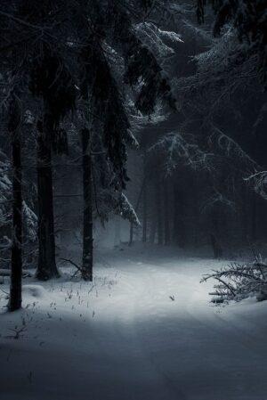 Foto de un Bosque Nevado en la Noche