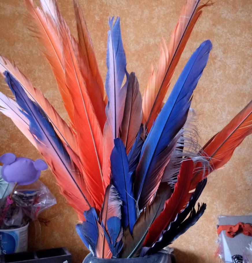 Conjunto de Plumas Coloridas